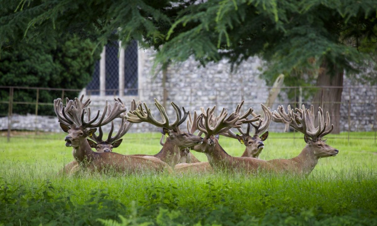 houghton hall garden furniture with The Deer Park on Iwant2create co furthermore Walled Garden in addition Country Garden Bench additionally 21599329 Long Forgotten Georgian Designer Returns Limelight Gilty Secret likewise Map Of Grounds.