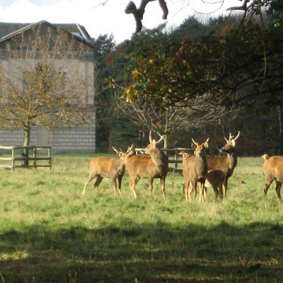 April 2015 Web furthermore The Deer Park in addition Products Offer3 likewise Lacquered Furniture as well Contemporary Sculptures. on houghton hall garden furniture